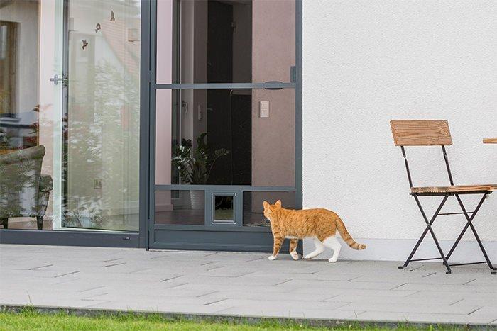 Katze auf der Terrasse geht in Richtung einer Terrassetür mit Haustierklappe