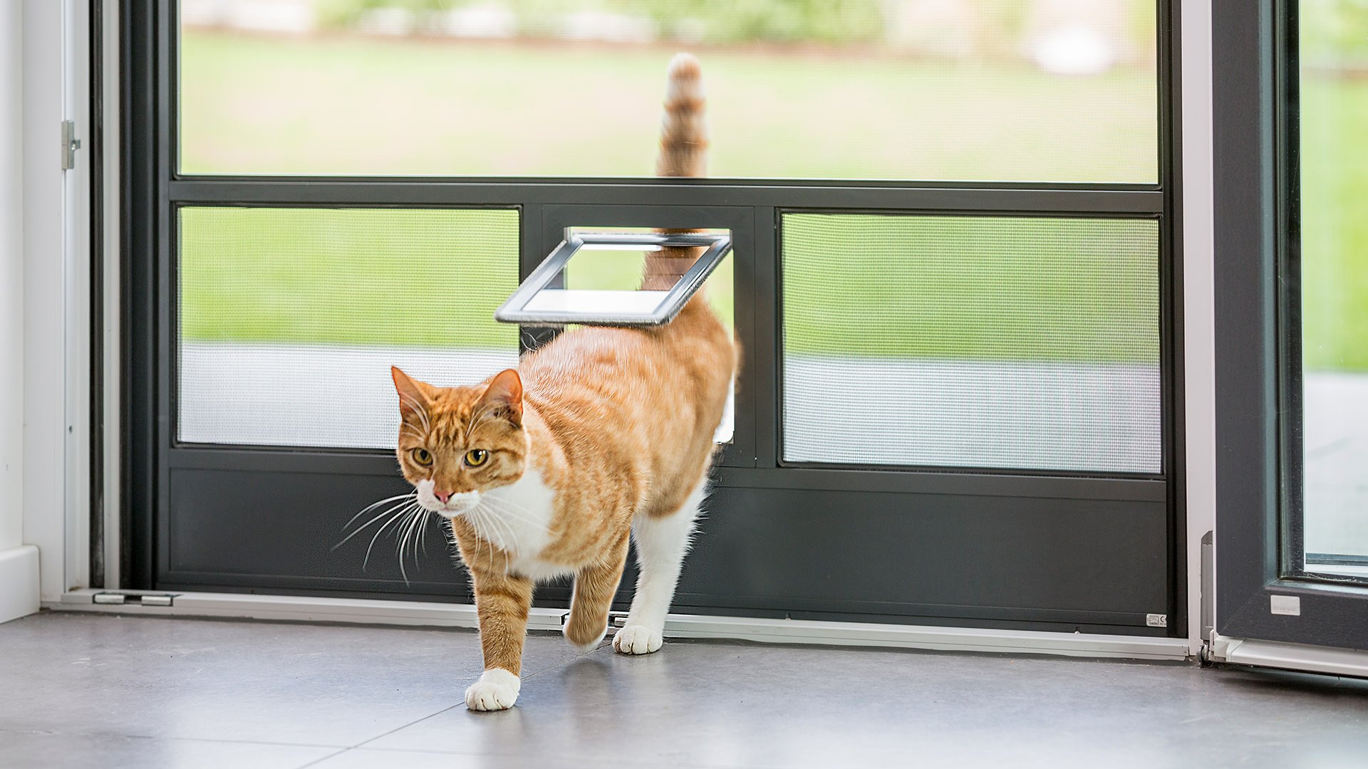 Katze geht durch eine Katzenklappe in einer Fliegengitter-Tür