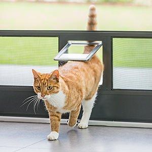 Katze kommt durch eine haustierklappe