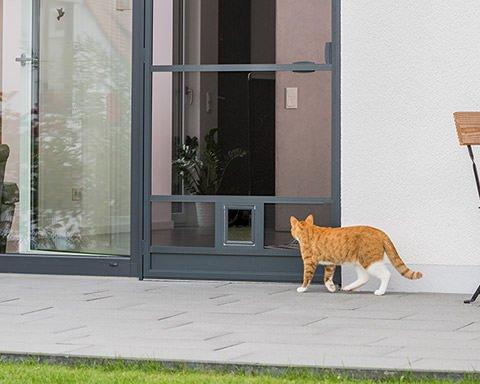 Katze auf der Terrasse läuft in Richtung einer Katzenklappe in einer Fliegengittertür