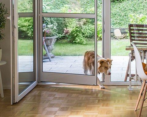 Hund kommt durch eine Fliegengitter-Pendeltür ins Wohnzimmer